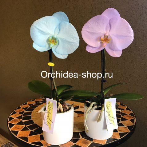"""Композиция из орхидей-фаленопсисов: Фаленопсис """"Синголо"""" в керамике"""