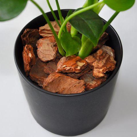 Декор грунта «Кора дерева»
